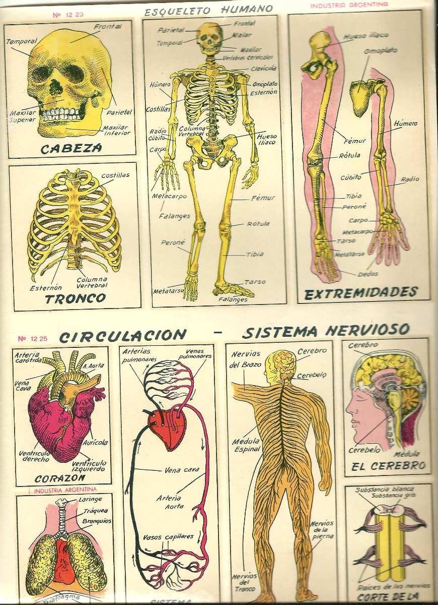 Plancha Calcomanias Al Agua Anatomia Humana - $ 60,00 en Mercado Libre