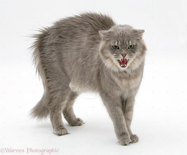 Resultado de imagem para imagens de gato no pote
