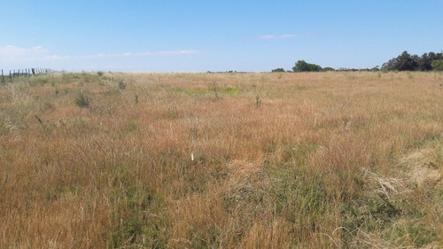 10 hectáreas con casa amplia, se financia, ideal stud