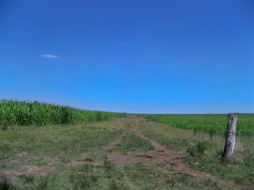 110 has agrícolas con const. e inst. próximas a cardona