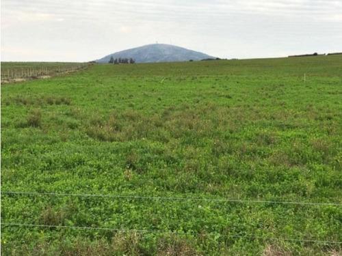 125 has. ganadero-agrícola maldonado