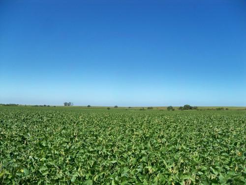 127 has agrícolas próximas a nueva palmira