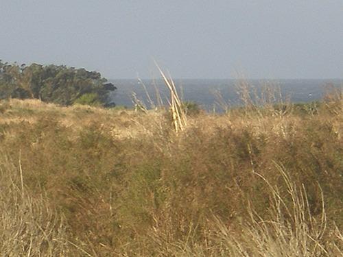 15 has.muy cerca de la playa,a 4 km d la pedrera y la paloma