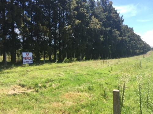 2 campos de 3 hectareas y uno de 4 hectareas financ directa