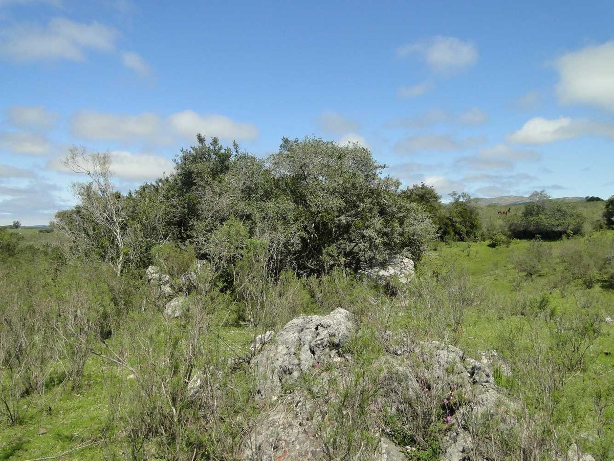 2 campos vistas del betel -11.5ha - en rincon del coronilla