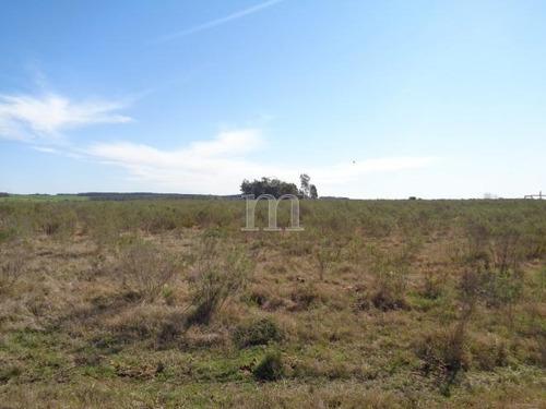 20 hectareas sobre ruta 11