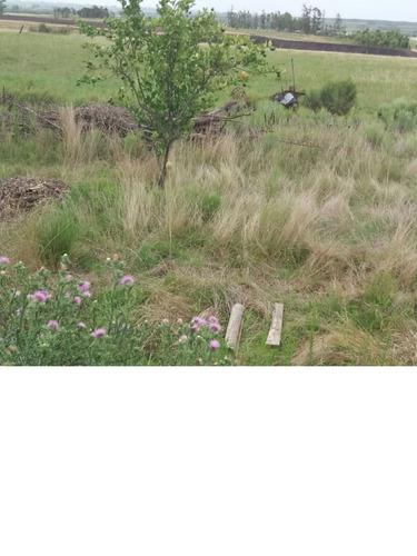 3 hectáreas con casa, chacra en venta en montes