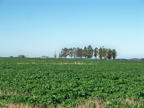 366 has agrícolas en colonia
