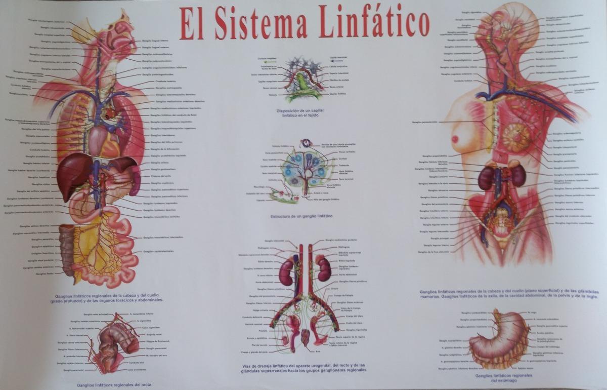 Lujo Ganglios Linfáticos Mapa Del Cuerpo Galería - Anatomía de Las ...