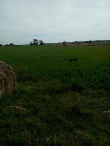 40 has agrícolas ganaderas