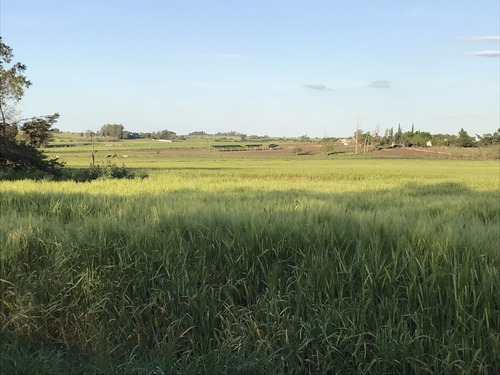 45 hectáreas a 14 km. de nueva helvecia