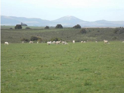 51 has. agricola-ganadero canelones