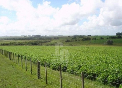 901 has agricola cerro largo