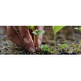 Eucaliptus X 100 Plantines $9 C/u -