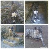 Cimarrones Hermosos Cachorros, Envio Incluido!!!