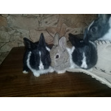 Conejos, Mascotas