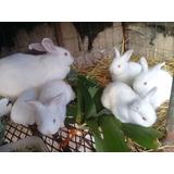 Conejos, Conejitos, Mascotas