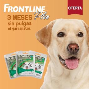 Frontline Antipulgas Para Perros Entre 20 Y 40kg - Pack De 3