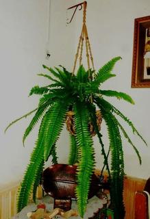 Plantas De Interior Artificiales, Helecho Grande.