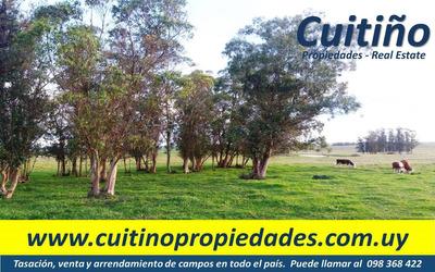 Campo En Venta. 9 Has. Buena Tierra, Acceso Y Ute