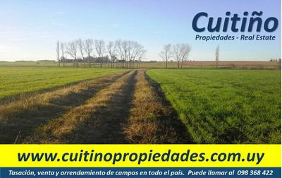 Campo En Venta. 45 Has 100% Agricola