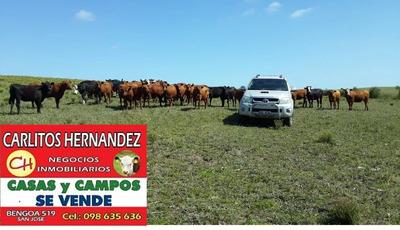 San Jose Si Busca Comprar Vender O Arrendar Campos Estancia