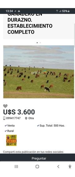 Campo Agrícola Ganadero En Durazno 500 Hs.