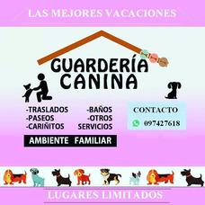 Pensionado Canino Para Mascotas Costa De Oro Con Traslado