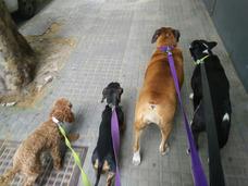 Adiestramiento Canino Metodo Amigable No Militarizado
