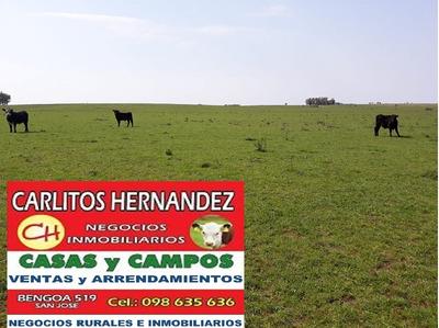 Campo Agrico Ganadero Venta 300 H U$ 4.900 San Jose Financia