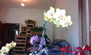 Arreglos Florales Eva