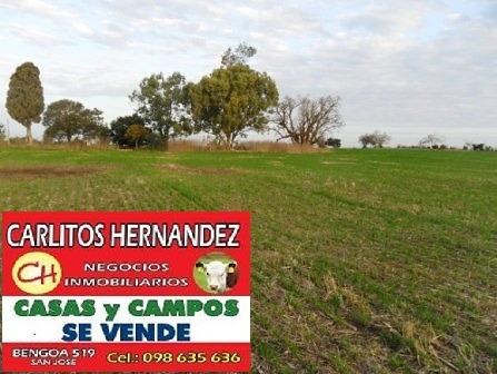 Campo P Venta Salto 1.200 Has Agri Ganadero U$ /ha