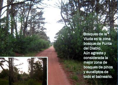 Lote En Pleno Bosque Punta Del Diablo Rocha