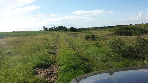 Fracción Agrícola En La Localidad De Conchillas. Ref: 1.017