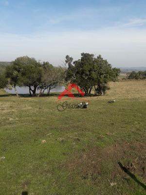 Chacra En Paraje Las Cañas, Maldonado. - Ref: 1447