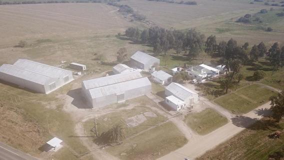 Oportunidad - 5 Galpones, 6 Casas, Balanza R 22 A 1km De R 1