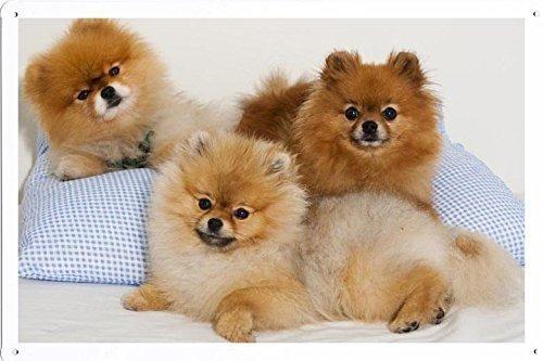 Pomeranian Husky - Hogar, Muebles y Jardín en Mercado Libre