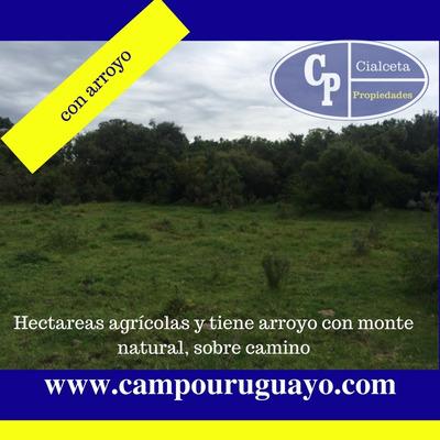 Campo Agrícola Con Arroyo