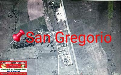 Zona San Gregorio-san Jose Propiedades Pra Venta Y Alquiler