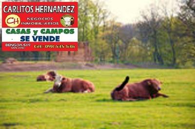 Campo Venta Tacuarembo 10.000 H 3 Establecimien U$ 2.500 H