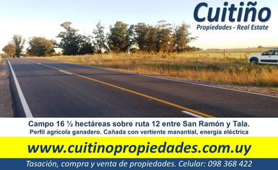 Campo 16 1/2 Has Sobre Ruta 12 San Ramon