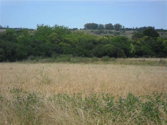 Campo De 42 Hectáreas En Tarariras. Ref: 1.000