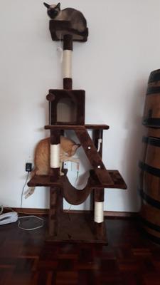 Guarderia Para Gatos