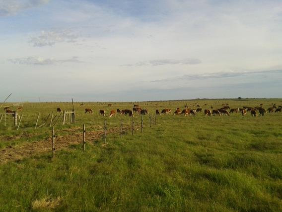 Campo Ganadero & Agrícola 321 Hectáreas Muy Buena Tierra.