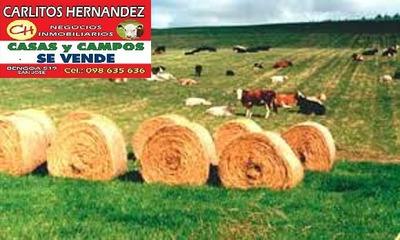 Campos Estancias Chacras En Uruguay Venta Compra Arrendar