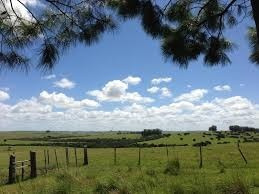Campo Forestal Ganadero