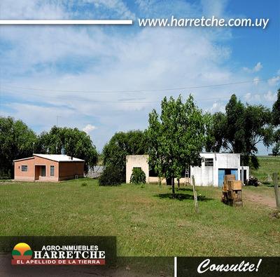 Chacra Con 2 Casas Y Galpón - Sauce Inmobiliaria Harretche