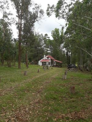 Campo Chacra Lavalleja, Forestado Con Casa. Oportunidad!!!
