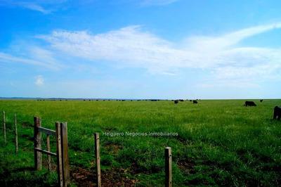 Campo De 900 Ha En Rio Negro Con 300 Ha De Pradera Cw76362
