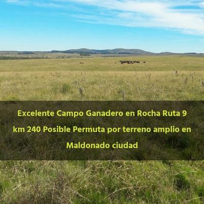 Campo De 33 Hectáreas En Rocha Km 240 Ruta 9